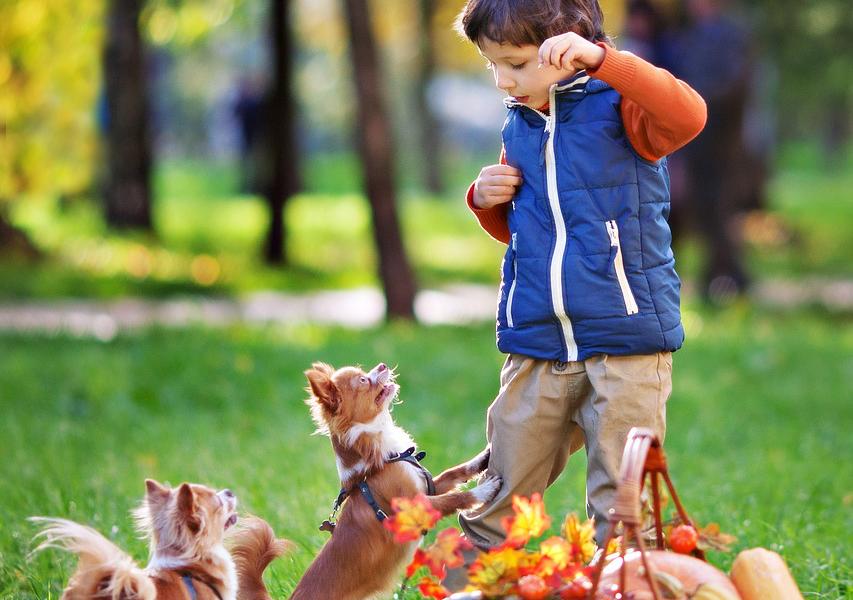 犬,犬を飼うという事,子供,教育,ペット,